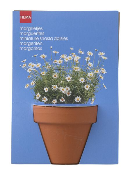 Anzuchtset im Topf – Margeriten - 41820041 - HEMA