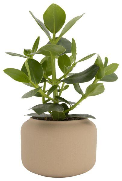 Blumentopf, Ø 15 x 11.5 cm, Keramik, naturfarben 15 x 11.5 hellbraun - 13311047 - HEMA