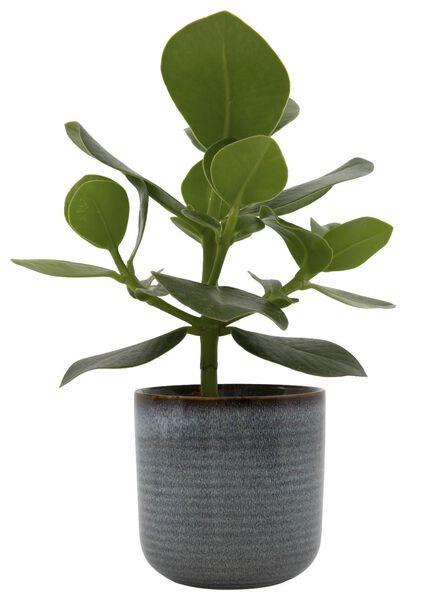 flowerpot Ø11x11.5 earthenware reactive glaze 11.5 x 11 natural - 13311045 - hema