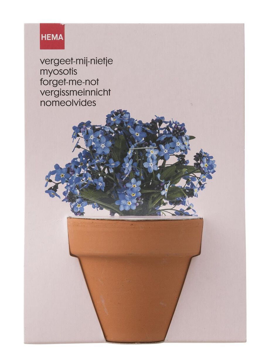 Images Plant Seed For Forget Me Nots In A Pot 41820040 Hema