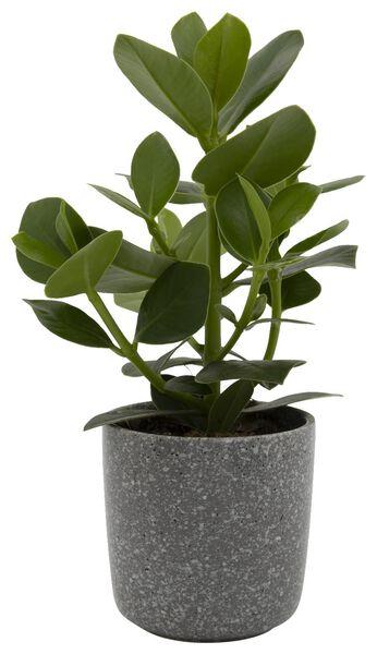 Blumentopf, Ø 12 x 12 cm, Keramik, grau - 13311046 - HEMA