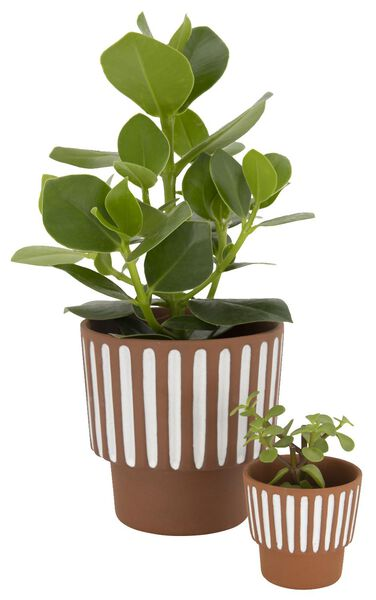 flower pot Ø14x13 terracotta stripe white 14 x 13 terra - 13311042 - hema