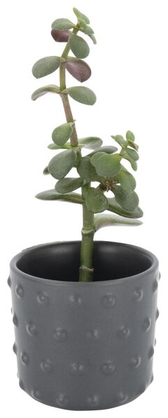 pot de fleurs Ø 6,5 cm - céramique - gris - 13392063 - HEMA